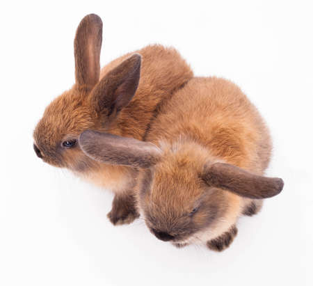 Two bunny rabbits cuddling together isolated on the white. Stock Photo - 18798029