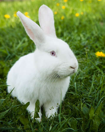 Rabbit in the grass photo