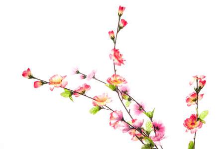 studio photography shot: Beautiful flowers  on the white background