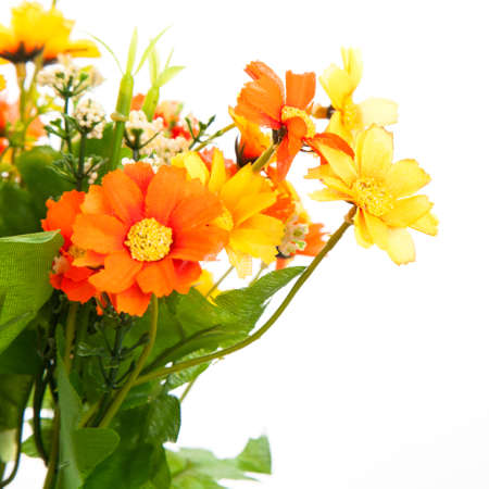 Beautiful flowers  on the white background photo