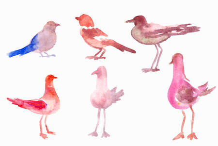 Watercolor birds Vector