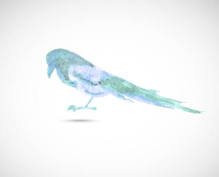 magpie: Watercolor magpie