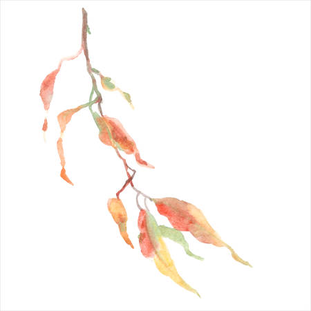Green leaves on branch. Vector