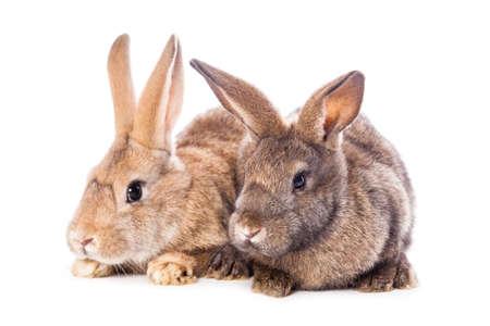 Cute rabbits photo