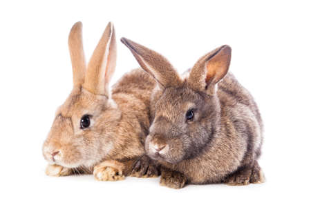 rabbit ears: Cute rabbits