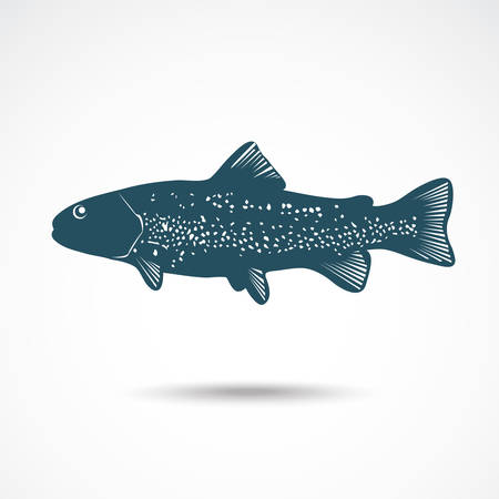 Illustrations of Rainbow Trout. Vector