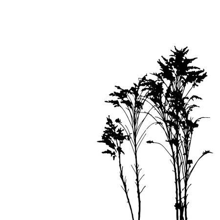 herbs wild: Vector hierbas silvestres