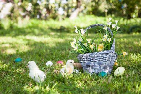 splint: Pollitos lindo con la cesta en la hierba