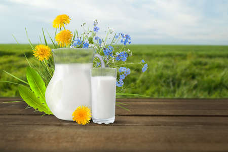 vacas lecheras: Milk and sunny spring flowers field . Design for you.