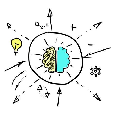 Left and right brain hemispheres