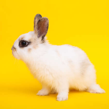 Little cute rabbit on the yellow background