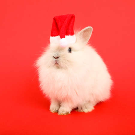 Christmas cute rabbit.
