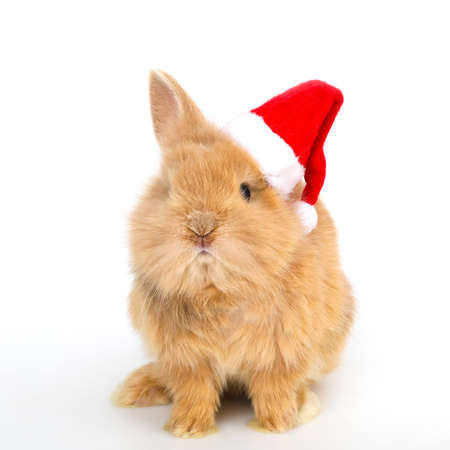 Baby rabbit with a christmas hat on the white background Stock Photo