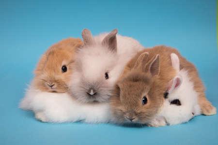 Little cute rabbits
