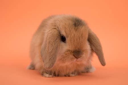 Baby cute rabbit
