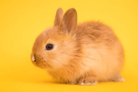 Baby cute rabbit