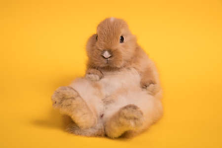 Small cute rabbit lying
