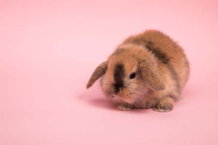 Baby cute rabbit on the color background