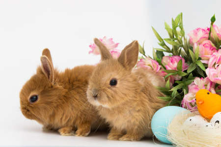 Little Bunny rabbits With Decorated Eggs