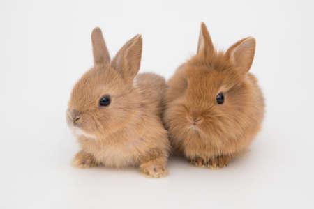 Bunny funny rabbits