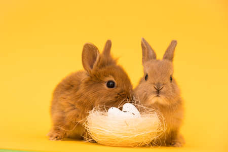 Easter bunny rabbits with egg