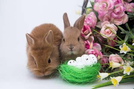 Cute little rabbits Reklamní fotografie