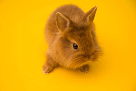 Conejito gracioso conejo