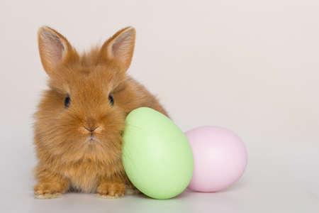 Lapin de Pâques avec des oeufs.