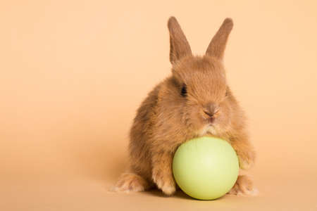 Easter bunny rabbit with egg. Stock Photo