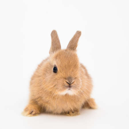 Bunny funny rabbit on the white background
