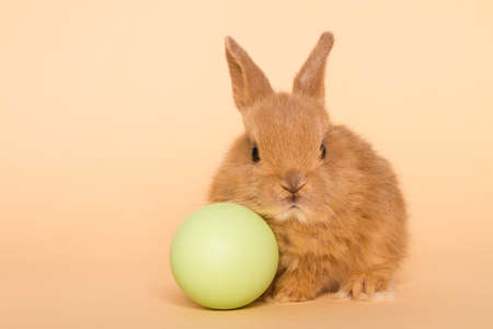 Easter bunny rabbit with egg. Easter holiday concept. Stock Photo