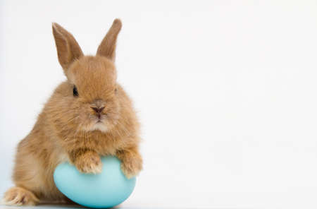 Easter bunny rabbit with eggs. Easter holiday concept.