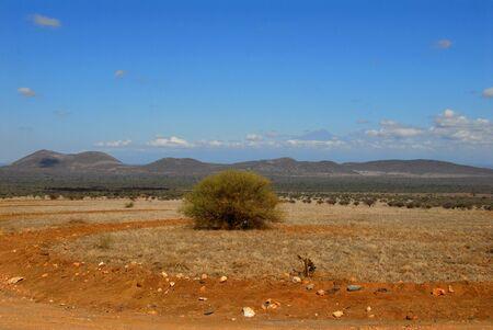 savana: savana in Kenia