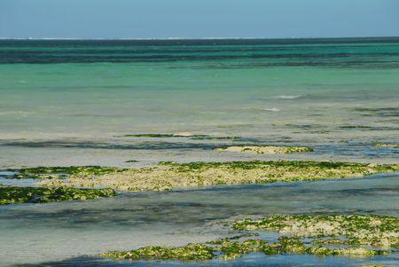 zanzibar: Kiwengwa strand in Zanzibar, Tanzania