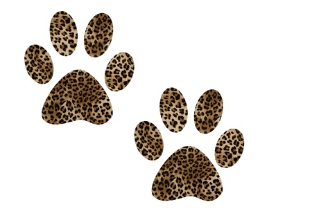 animal tracks: footprints of a lion Stock Photo