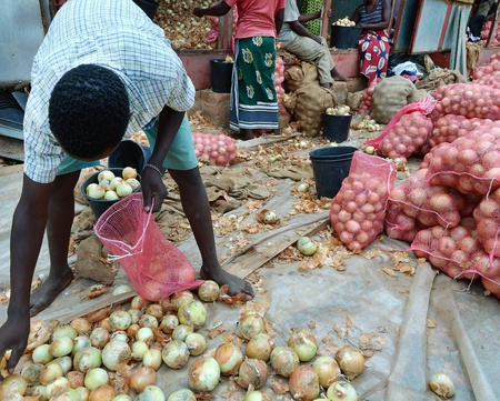 crop of onions