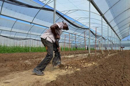 LUSAKA, ZAMBIA - DECEMBER 2: farmer works the soil in the greenhouses, which provide employment to 800 farmers, on December 2,2011 in Lusaka, Zambia