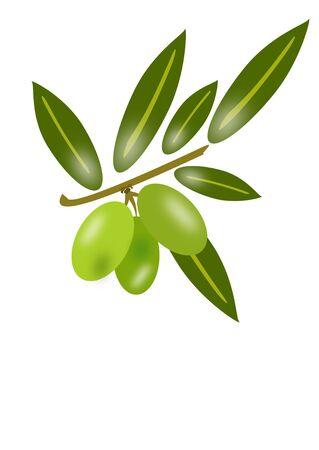 olives Stock Photo - 13126679