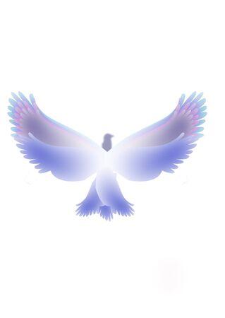 dove that flies symbol religious   photo