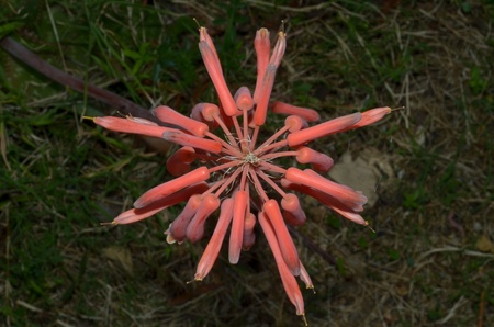cried: agave flower