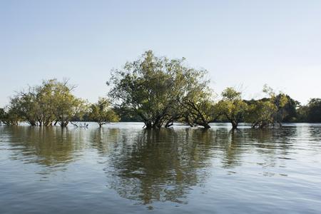cried: aquatic plants in the Zambezi river