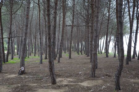 cried: pine forest
