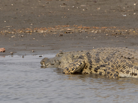 repent: crocodile in the park Malawi