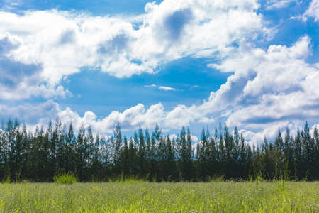 feild: Green feild with clear sky and mountain background