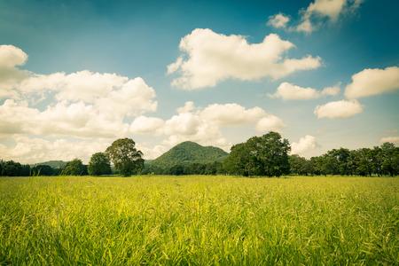 feild: Green feild with clear sky in vintage toned