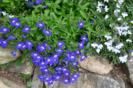 small purple flower: Small purple flower decorate on stone