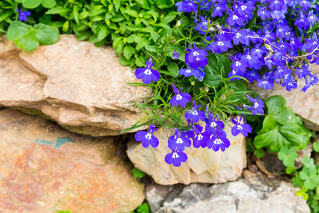 small purple flower: Small purple flower decorate on stone