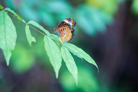 Butterfly on flower or tree in green garden