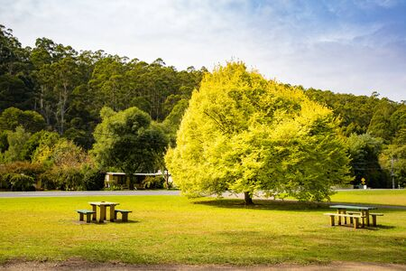 Yellow leaf tree with green grass and bench, Warburton Australia Stockfoto - 134894524