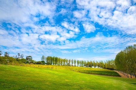 Meadow with nice  blue sky and vineyard, Yarra Valley, tarrawarra, Melbourne, Australia Zdjęcie Seryjne